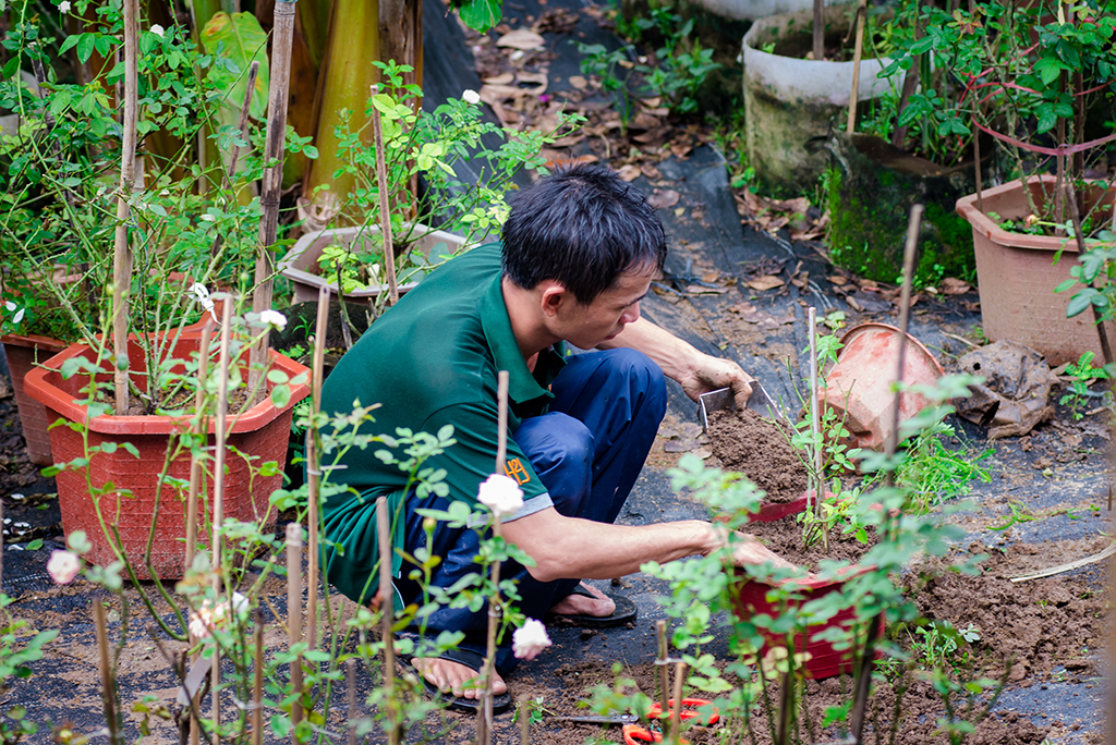 Placing the plants into the soil, fertilizing them and protecting them from the rains