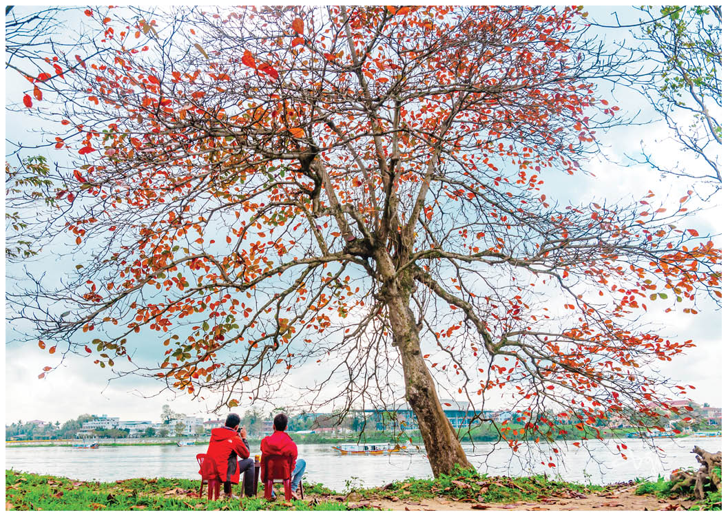 Leisurely watching the peaceful Huong river