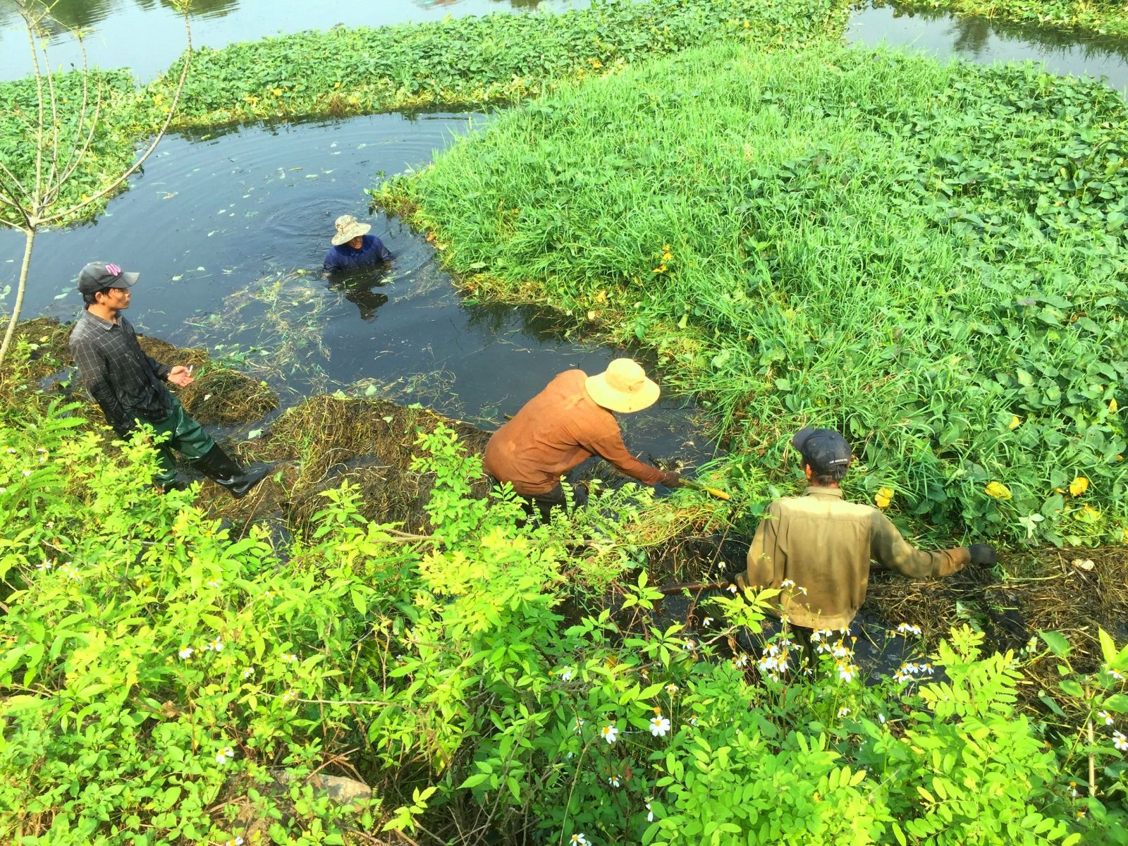To plant lotus, project implementers have struggled to clean the water surface