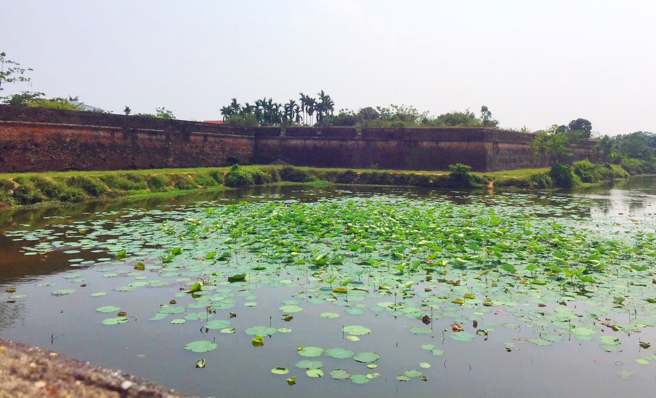 After nearly a month, at present, the lotus on Ngu Ha section on the two sides of An Hoa gate has grown up quite quickly, contributing to creating a green and airy landscape for this river.