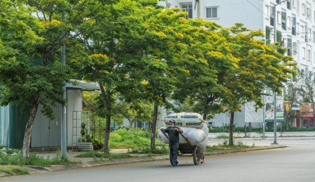 A rickshaw worker passing the street shaded by flowers
