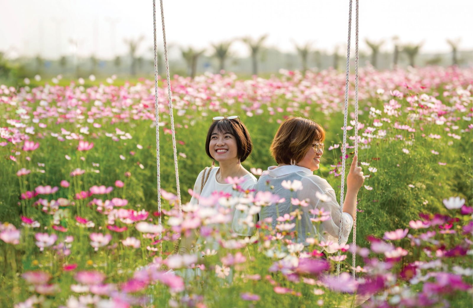 Lost in cosmos flowers