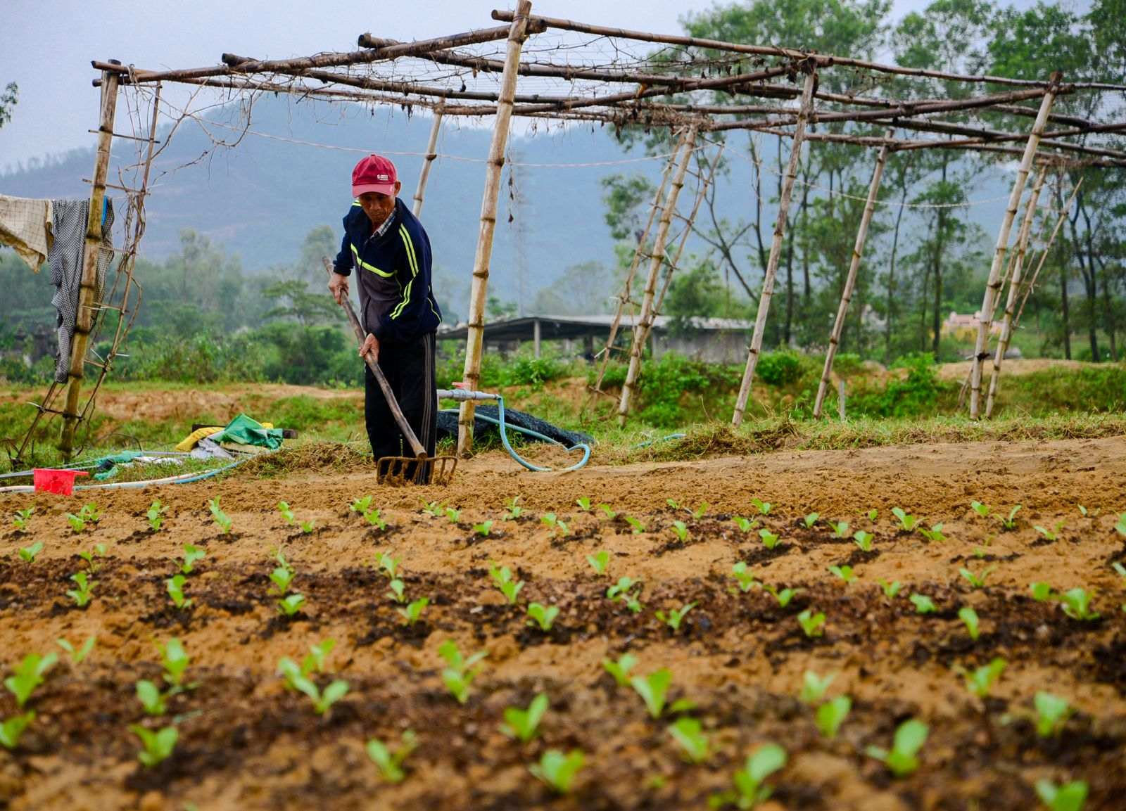 Taking advantage of the favorable weather, local people collect the dead crops and prepare the soil