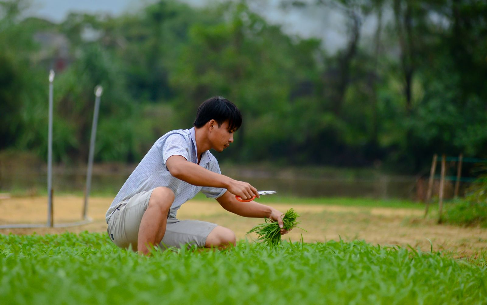 Water spinach is chosen for its easy adaptability to the moist soil