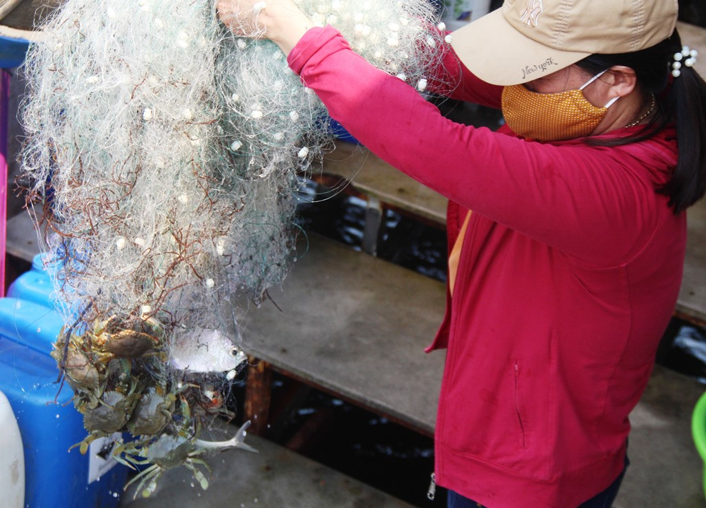 At this time, fishermen harvested many types of shrimp and fish