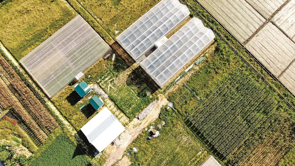 The net house to plant golden pear-shaped melons