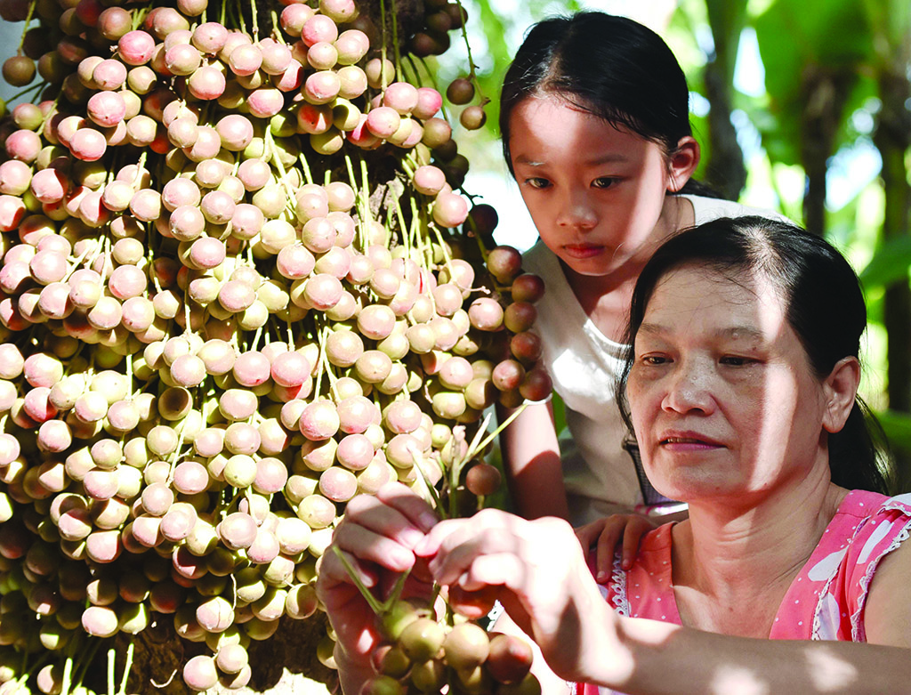 """The """"girl group"""", including children, have a passion for the sweet and sour mulberries"""