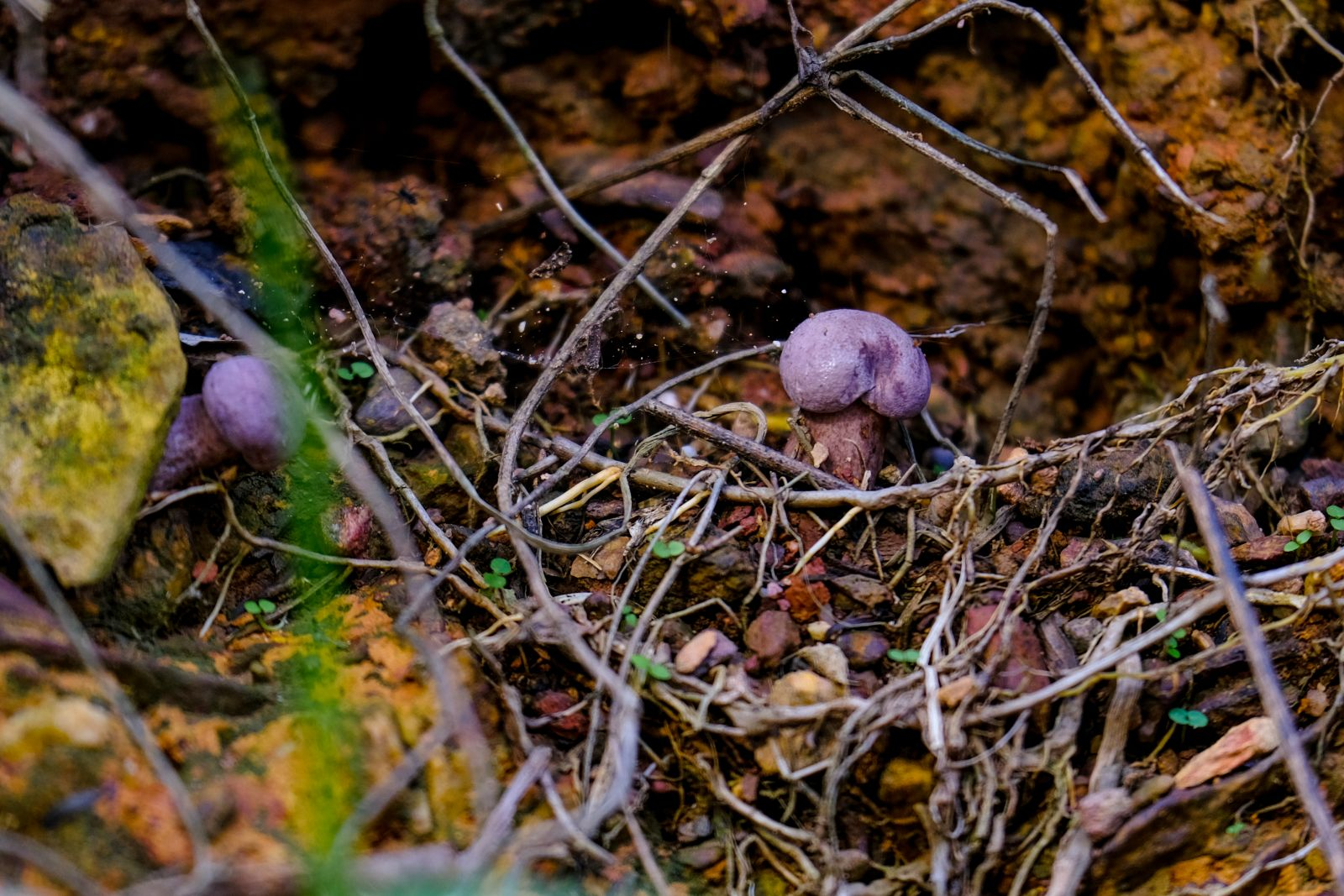 The first mushrooms