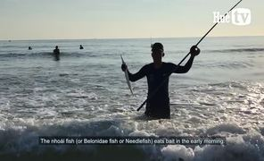 When the sea is calm, fish the needlefish