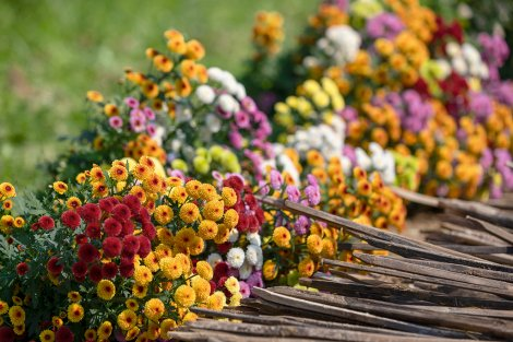 Countryside flowers come to town