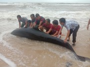 Rescuing dolphin washed ashore
