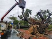 Hue city uses the broken nacre tree for the sculpture competition at Festival 2021