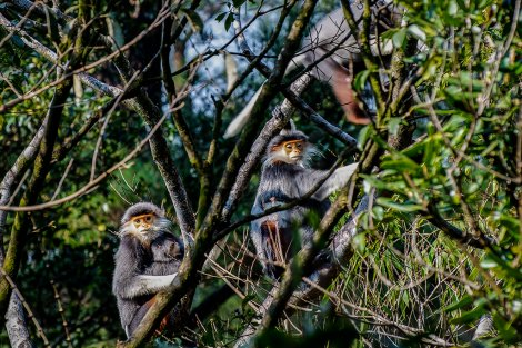 A look at rare and precious species in Bach Ma National Park