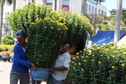 Hue: Spring flower markets to take place in many locations at the same time
