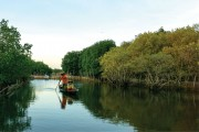 Ru Cha turned into Central Coast's largest concentrated mangrove forest